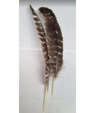 natural barred turkey feathers